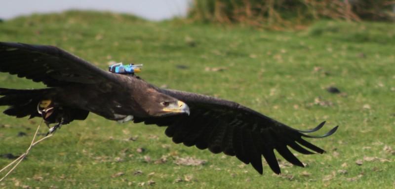 Cerita Fabel Terbaru Lomba Terbang Burung