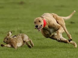 Kumpulan Cerita Hewan Fabel Kelinci dan Anjing Petani