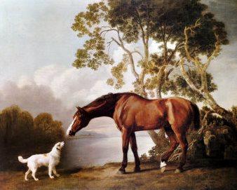 Kumpulan Cerita Hewan Anjing Dan Kuda