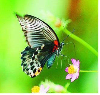 Contoh Cerita Hewan Singkat Kupu-kupu dan Seekor Ngengat