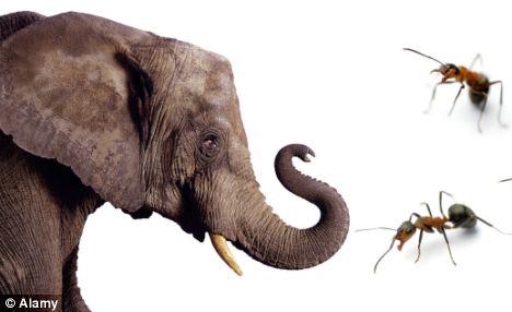 Cerita Dongeng Binatang Fabel Semut Dan Gajah
