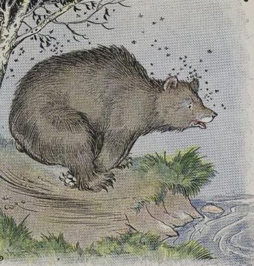 Cerita Dongeng Indonesia Beruang dan Lebah Madu