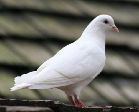 Cerita Dongeng Hewan Burung Hitam