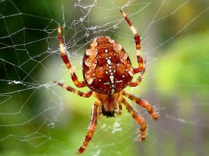 Cerita Dongeng Anak Anak Sebelum Tidur Laba-laba sombong