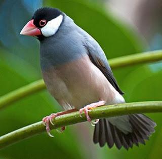 Dongeng Fabel Indonesia Terbaru : Lamaran Burung Bangau