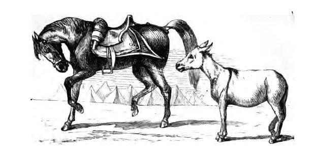 Dongeng Anak Sedunia Keledai Dan Kuda