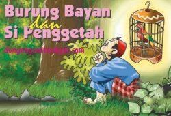 Cerita Anak Indonesia : Kisah Si Burung Bayan dan Si Penggetah