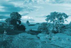 Cerita Cerpen Pendek Untuk Anak : Pohon Cemara dan Semak-Semak