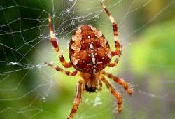 Cerita Dongeng Anak Anak Sebelum Tidur : Laba-laba sombong