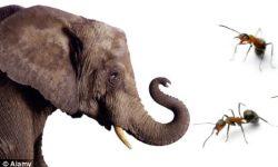 Cerita Dongeng Binatang : Fabel Semut Dan Gajah