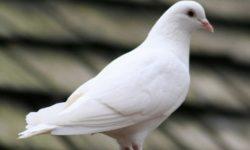 Cerita Dongeng Hewan : Burung Hitam