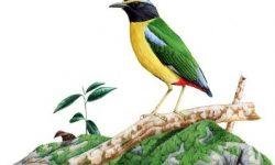 Kumpulan Cerita Hewan Fabel Pendek Terbaru Jz13zzl1708 Lokal