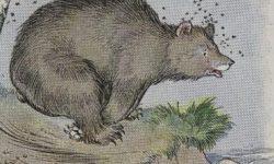 Cerita Dongeng Indonesia : Beruang dan Lebah Madu