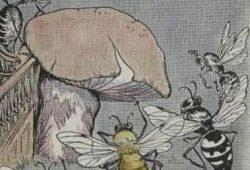 Cerita Dongeng Sederhana dari AESOP : Pertengkaran Lebah dan Tawon