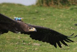 Cerita Fabel Terbaru : Lomba Terbang Burung