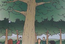 Cerita Legenda Jaman Dahulu : Beruang di Pohon Eukaliptus