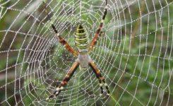 Cerita Rakyat Papua Barat Dongeng Papua Laba-laba yang sabar