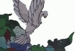 Fabel Cerita Rakyat : Burung Kepodang dan Kakatua