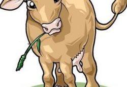 Dongeng Anak PAUD : Domba dan Sapi