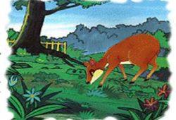 Fabel Cerita Rakyat Nusantara : Kancil Mencuri Mentimun