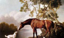 Kumpulan Cerita Hewan : Anjing Dan Kuda