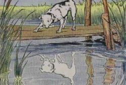 Dongeng Cerita Rakyat Pendek : Anjing dan Bayangannya