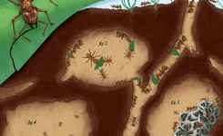 cerita rakyat fabel sarang semut