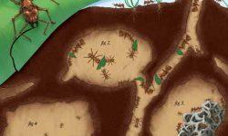 Cerita Rakyat Fabel : Sarang Sang Semut
